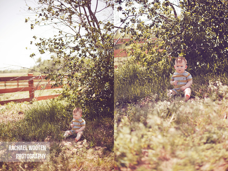 rachael wooten photography denver parker aurora colorado baby in trees and farm field
